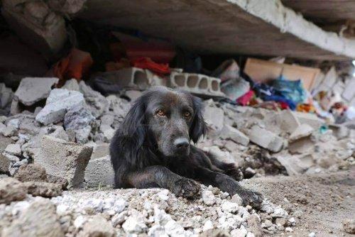 Erdbeben in Ecuador: Hund möchte sein Haus nicht verlassen