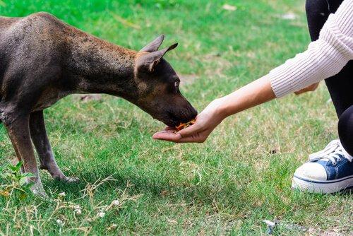 Hund belohnen oder bestrafen