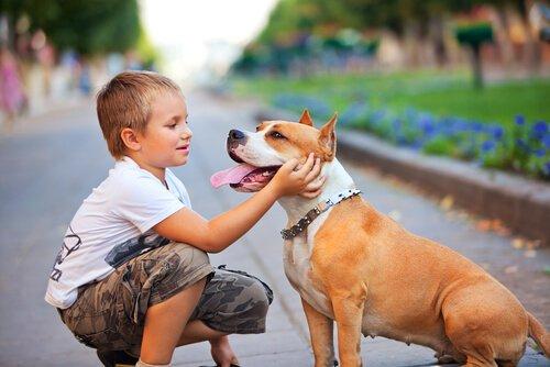 Kind mit Asthma streichelt Hund