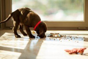 Wie oft soll der Hund nunt tasächlich gefüttert werden?
