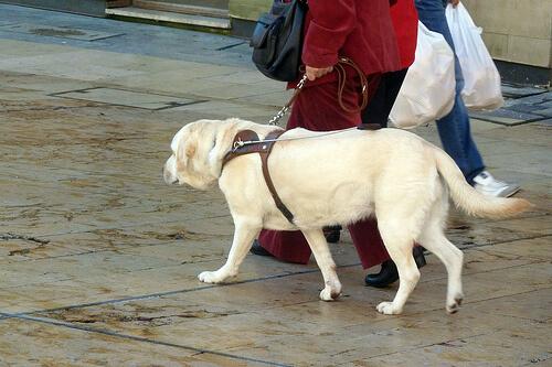 Sicher an der Leine mit dem richtigen Hundegeschirr