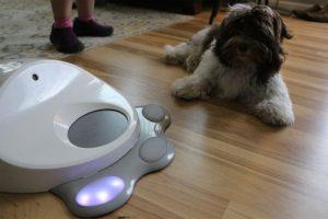 interaktives Spielzeug für Hund