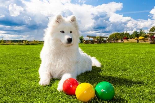 interaktives Spielzeug für Hund auf einer Wiese