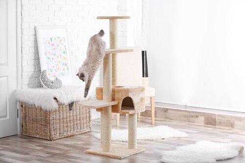 was tun wenn die katze alles zerkratzt deine tiere. Black Bedroom Furniture Sets. Home Design Ideas