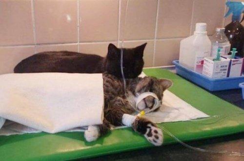 Katzen im Krankenhaus