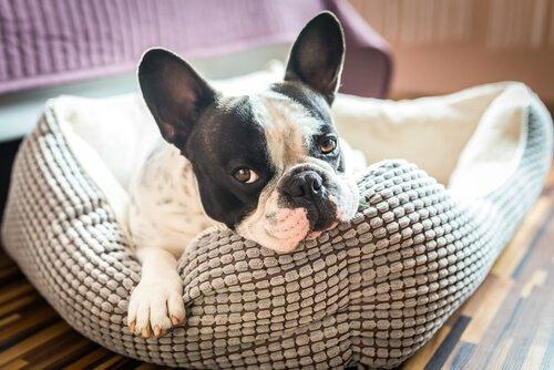 sauberes Haus trotz Hund