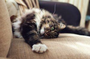 sauberes Haus trotz Katze
