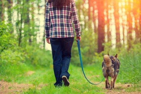 4 Tipps für einen angenehmen Spaziergang mit deinem Hund