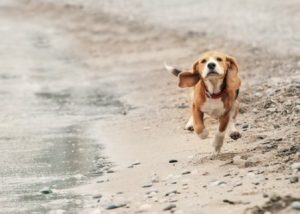 Hund macht Spaziergang am Strand