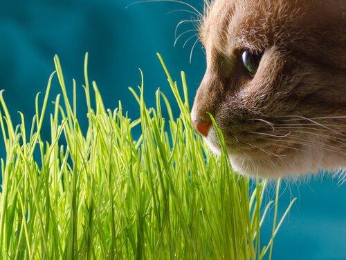 Katze schnuppert an Pflanzen, die zu Vergiftungen führen könnten