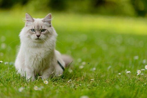 verlassene Katze in der Wiese