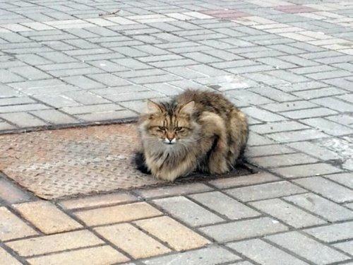 Verlassene Katze wartet über ein Jahr auf ihre Besitzer