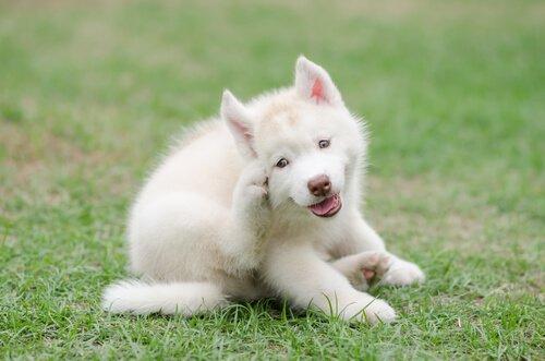Warum kratzen sich Hunde?