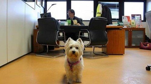 Bürohunde haben viele Vorteile!