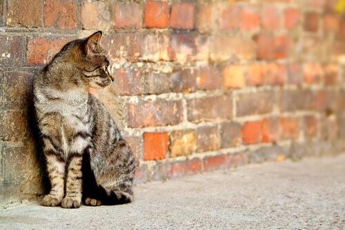 Das Aussetzen von Haustieren - Katze