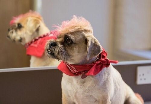 Das Färben von Haustieren - gefärbter Hund