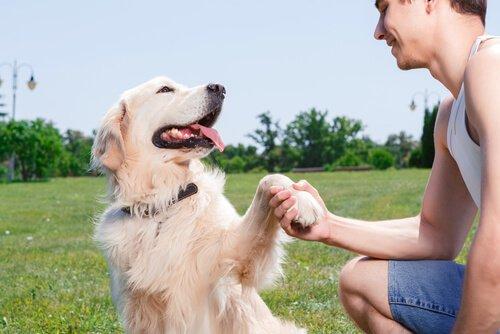Dein Hund merkt, ob du glücklich oder verärgert bist