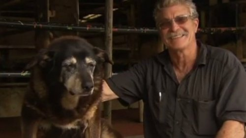 Der älteste Hund der Welt ist tot