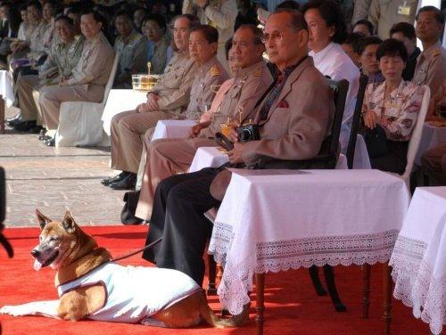 Der König, der Hunde adoptiert