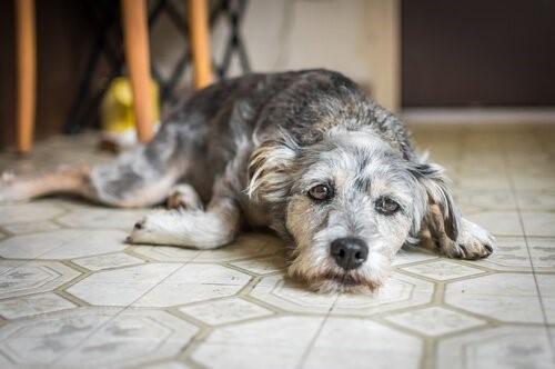 Die Angst bei Hunden - trauriger Hund