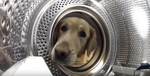 Die Besitzergreifung: Ein Hund rettet seinen Freund aus der Waschmaschine