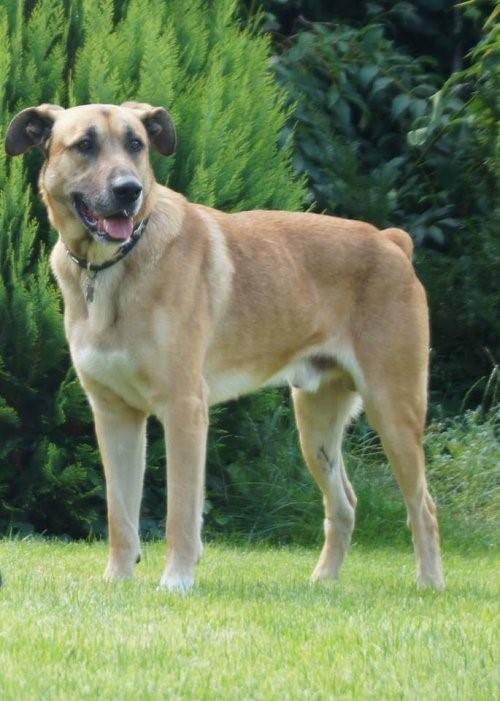 Die Stewardess und der Straβenhund - Rubio zu Hause