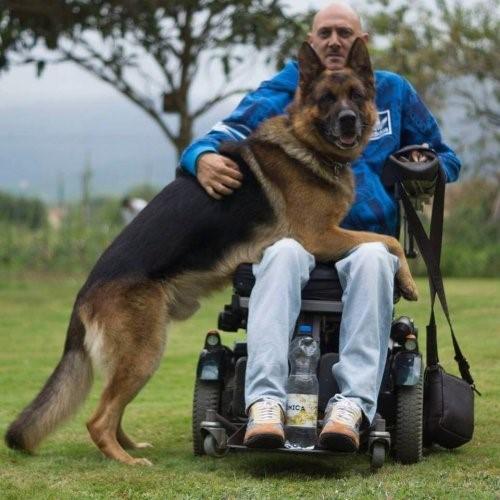 Die grenzenlose Liebe eines Hundes - Lobo und Rodolfo