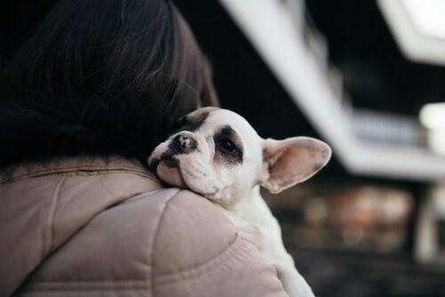 Es ist besser zu adoptieren - Hund im Arm seines Frauchens