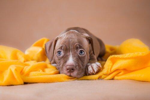 Hab keine Angst, adoptiere das Tier!