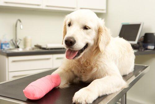 Hausapotheke für Hunde