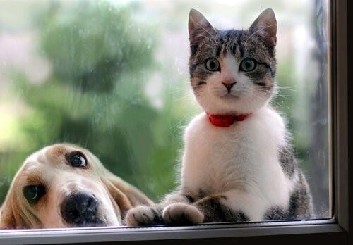 Hund oder Katze? Facebook analysiert dich