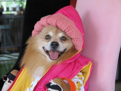 Hunde hassen Kleidung
