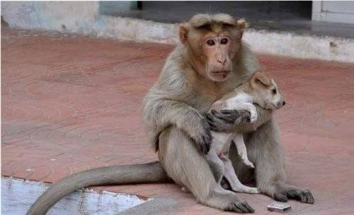 Husky Hündin Lilo - Freundschaft von Affe und Hund