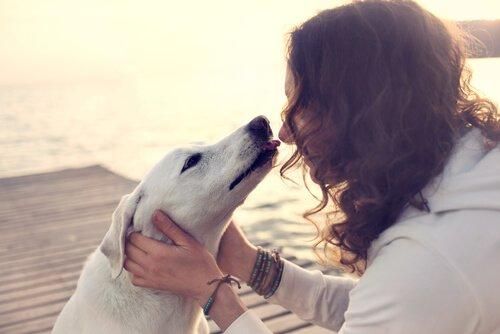 Infektionen die durch Hundeküsse übertragen werden können