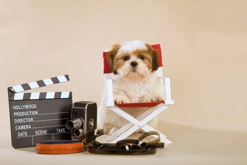 Können Hunde fernsehen - Hund mit Filmutensilien