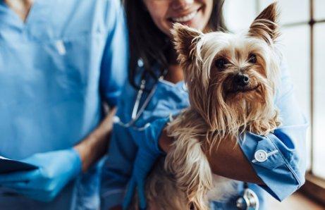 Kastration von Haushunden: 5 Vorteile