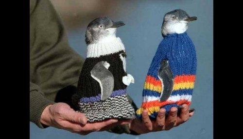 Kleidung für Pinguine