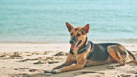 Liegt dein Hund auch gerne in der Sonne?