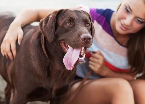 Misshandelte Frauen - Frau streichelt Hund