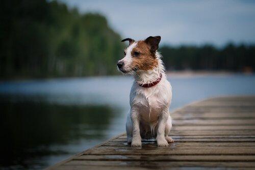 Pancho, der berühmteste spanische Fernsehhund ist gestorben