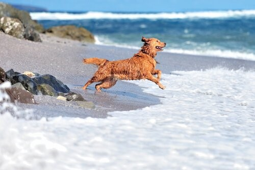 Pool für Hunde - Hund am Strand