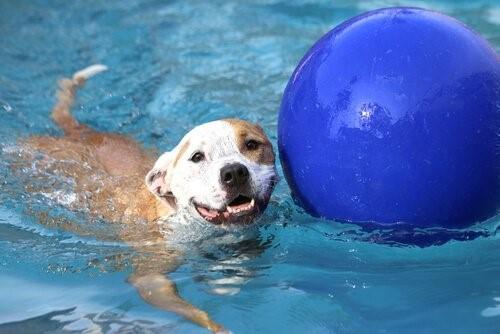Pool für Hunde - Hund schwimmt