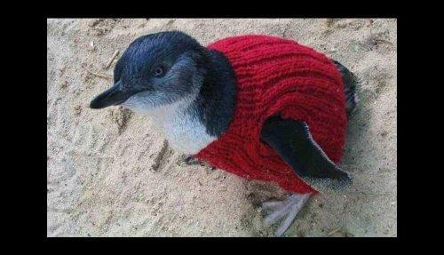 Pullover für Pinguine