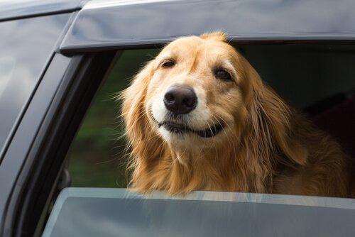 Reisekrankheit bei Hunden verhindern