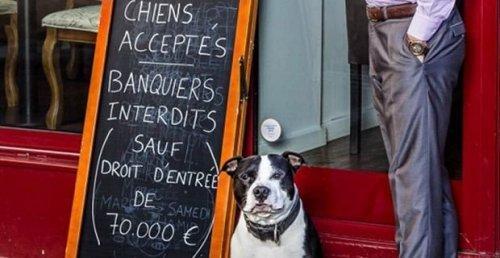 Restaurant in Paris erlaubt Hunde, jedoch keine Banker