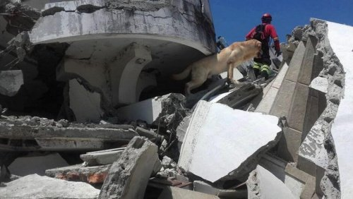 Rettungshunde in Ecuador: unbezahlbare Hilfe