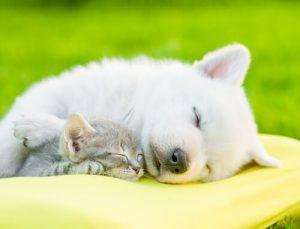 Schlaf ist wichtig für dein Haustier