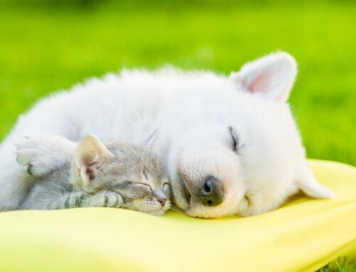 Schlaf ist wichtig für dein Haustier!
