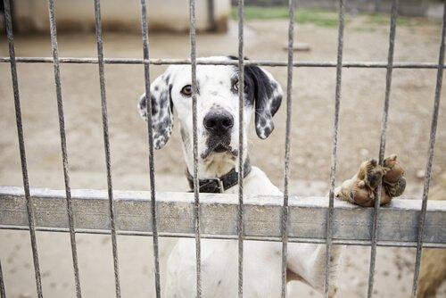 Tiermisshandlung im Internet melden