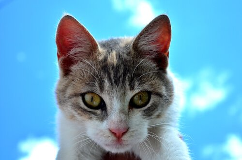 7 Tipps, um den Tod eines Haustiers zu überwinden